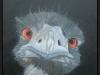Struisvogel zonder biefstuk