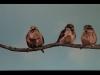 6 musjes