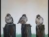 """Three little sparrows"""